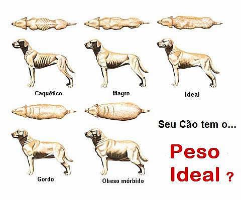 O Peso Ideal do Cão