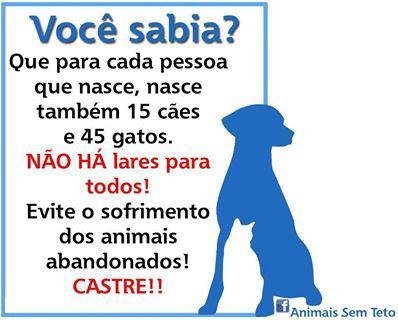 Para cada pessoa que nasce, nascem 15 cães e 45 gatos