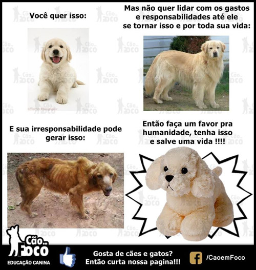 Salve uma vida - tenha um cão de pelúcia.