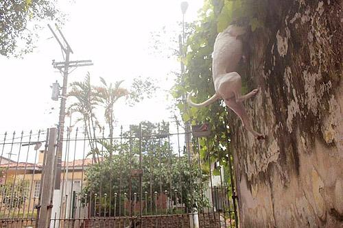 Cadela da Natália pulando o muro